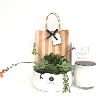 Succulent Garden And Candle Gift Pack
