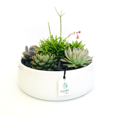 Grandeur Succulent Garden in White Ceramic Bowl (Large)
