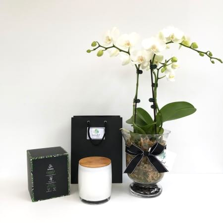 White Phalaenopsis Orchid and Candle Pack