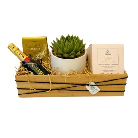 Lets Celebrate Our Love Succulent Surprise Gift Pack