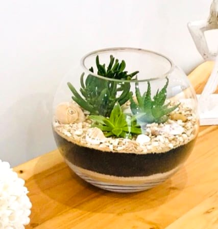 Succulent Filled Glass Fish Bowl Terrarium