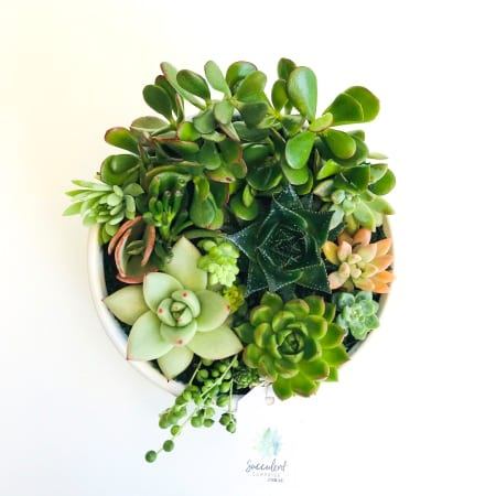 Succulent Garden in White Ceramic Bowl