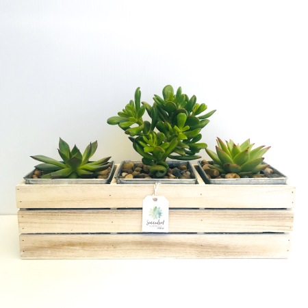 Succulents in Wooden Crate