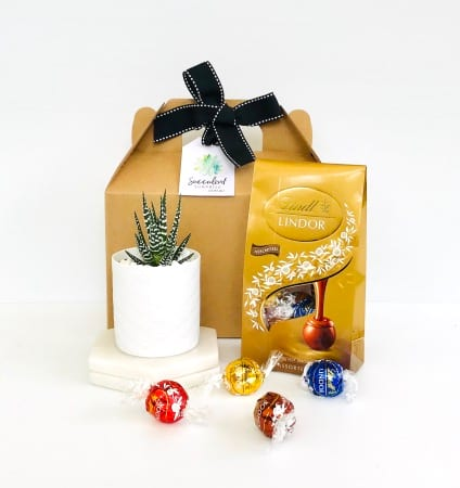 Succulent & Chocolate Gift Pack (Small)
