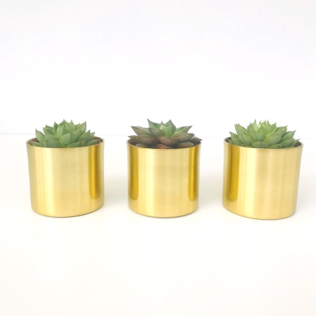 Belle Trio Mini Succulent Pack