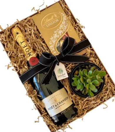Jade Succulent, Chocolate & Moet & Chandon Gift Box