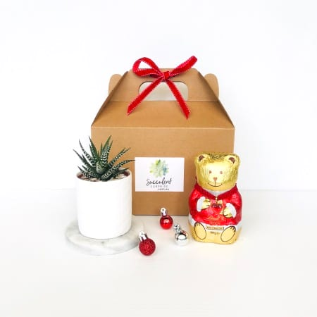 Xmas Mini Succulent and Choc Teddy Gift Pack