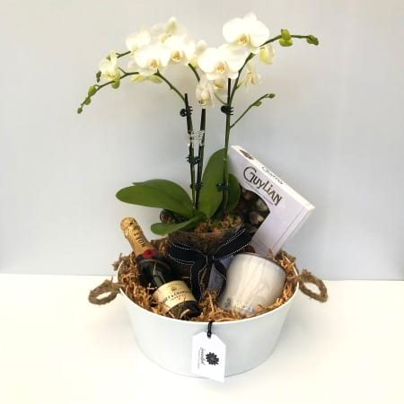 Lets Celebrate Orchid Gift Pack
