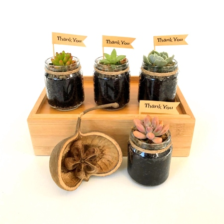 Mini Succulent In Glass Jar Bombonieres / Favors