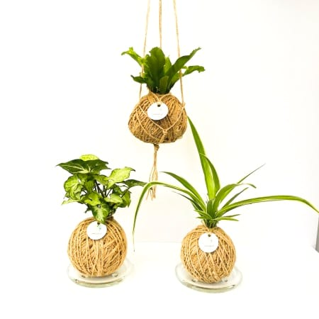 Indoor Jungle Kokedama Medium