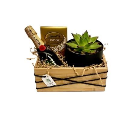 Lets Celebrate Succulent Surprise Gift Pack