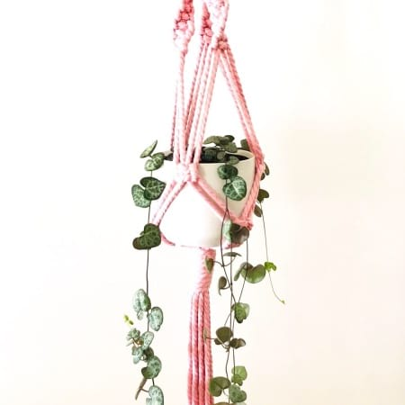 Macrame Plant Hanger With Fresh Succulent And Pot
